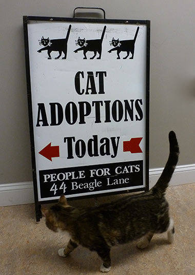 <h4>Adoption Hours</h4>Wednesdays 4-6 pm<br>Saturdays 10 am - 1 pm